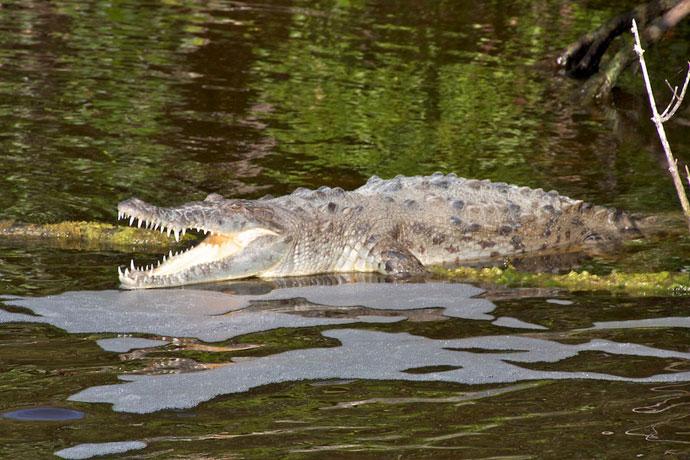 Everglades National Park i Florida