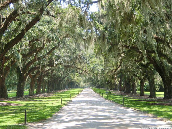 boone_hall_plantation_roadtrip_usa_2013-1