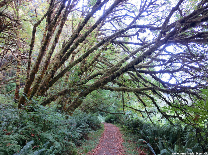 redwood_highway_1_california_roadtrip_2012-10