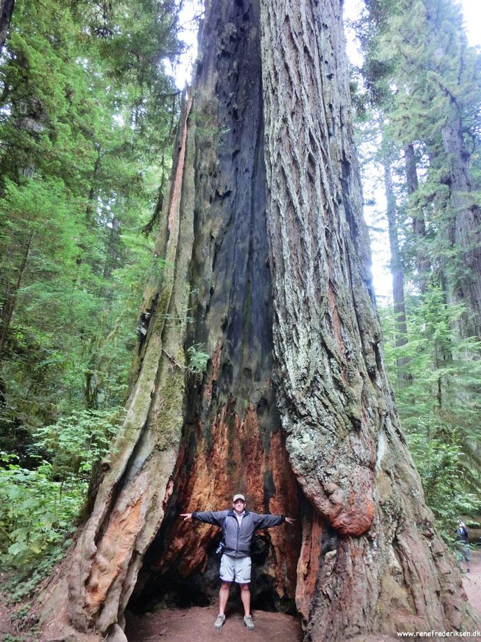 redwood_highway_1_california_roadtrip_2012-8