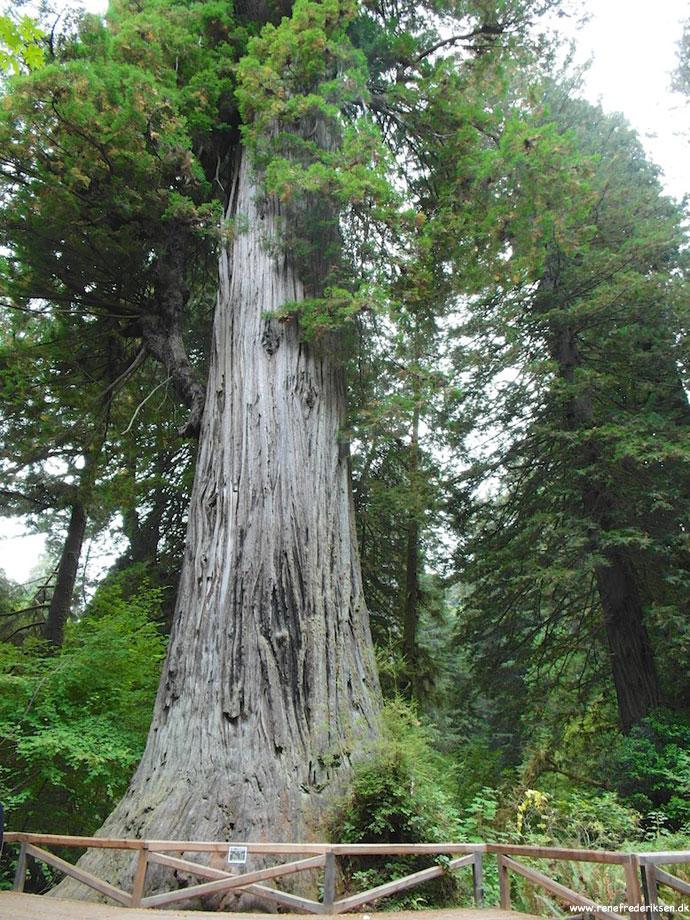 redwood_highway_1_california_roadtrip_2012-9
