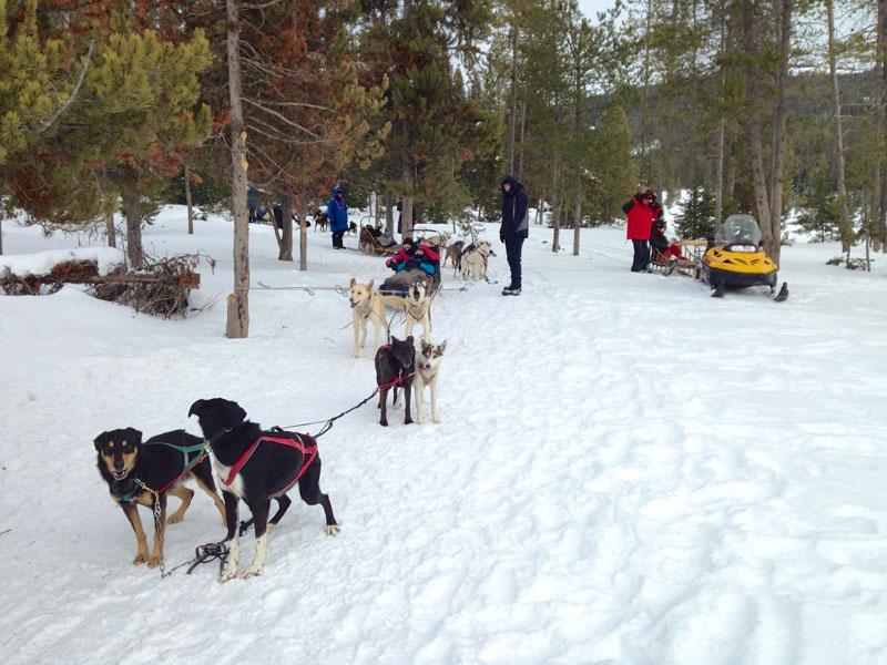 dogsled_tour_jackson_roadtrip_2013-12