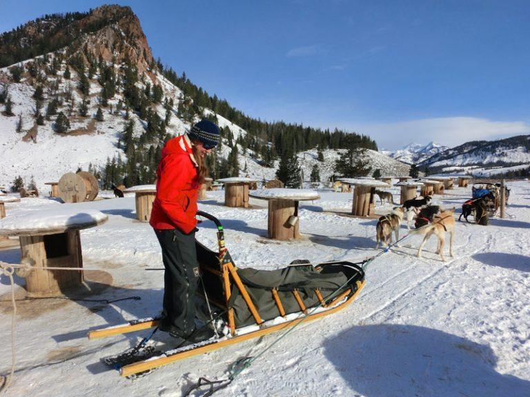 Hundeslædetur i Jackson Hole, Wyoming