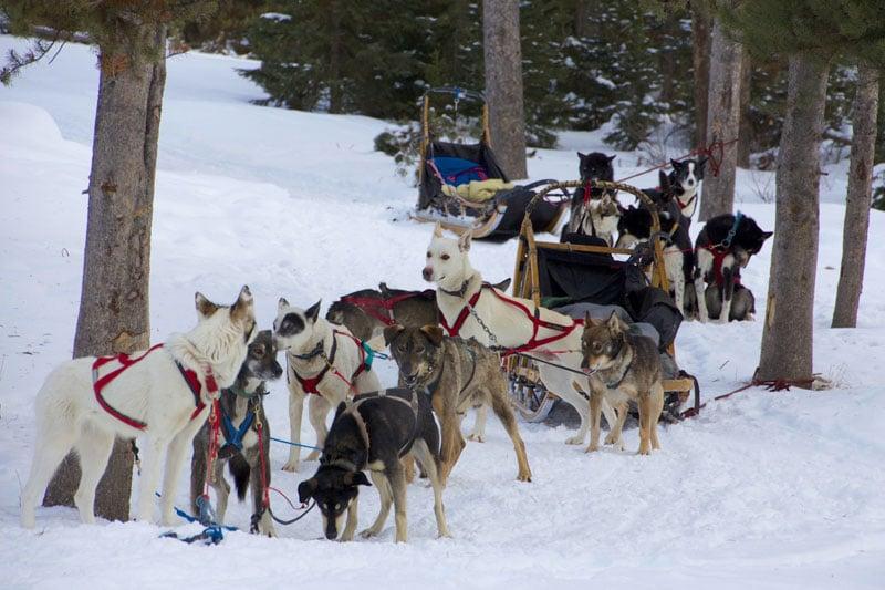 dogsled_tour_jackson_roadtrip_2013-8
