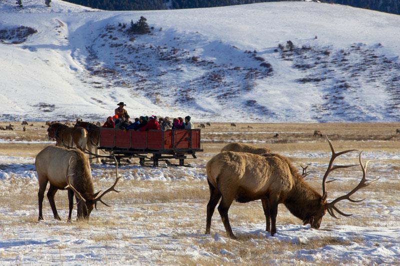 elk_refuge_jackson_hole_roadtrip_2013-10