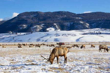 Elk Refuge Jackson Hole, Wyoming