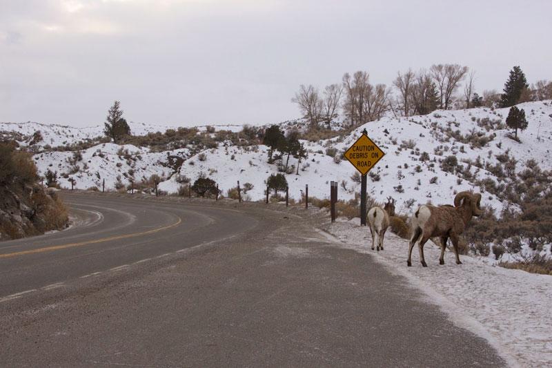 yellowstone_snowmobile_day2_roadtrip_2013-8