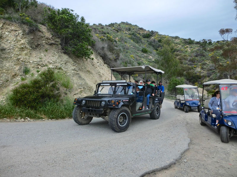 Santa Catalina Island tour