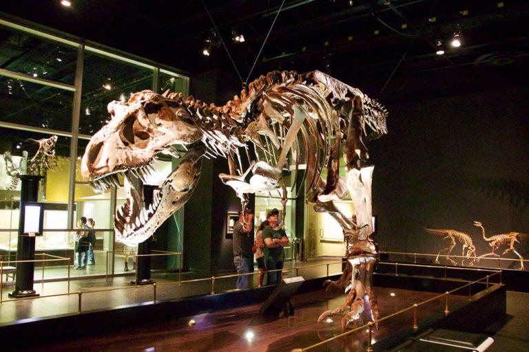 Dinosaurer på Royal Tyrrell Museum