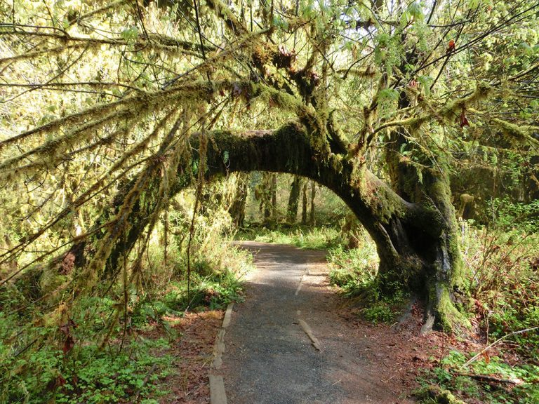 Hoh Rain Forest i Olympic National Park