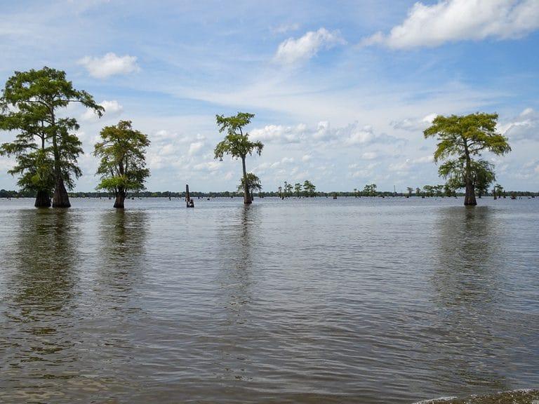 Swamp tour i Atchafalaya Basin